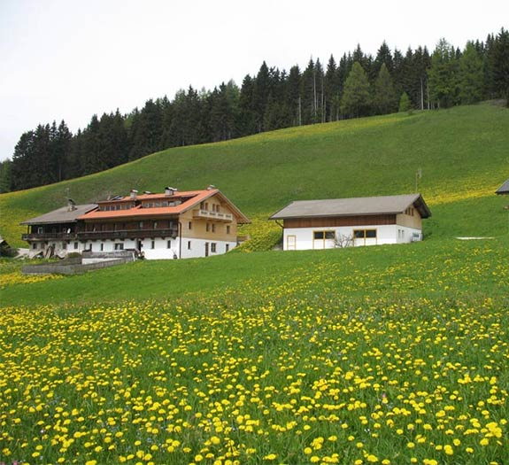 Hackerhof in spring